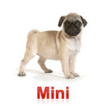 Gama especializada Mini
