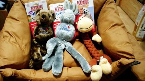 2010 12 28 Malu Dogs Cats  16